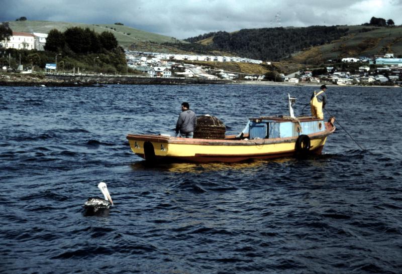 12-archipel-de-chiloe-pelican