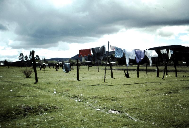 19-terre-mapuche