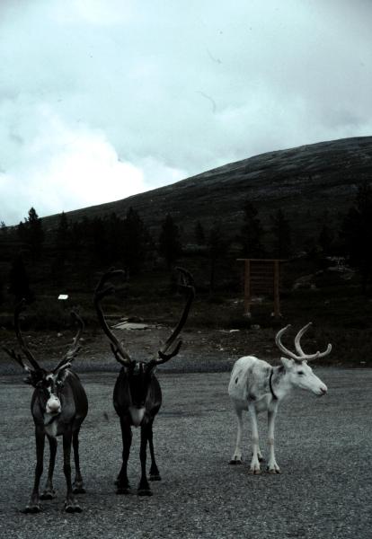 5-rennes
